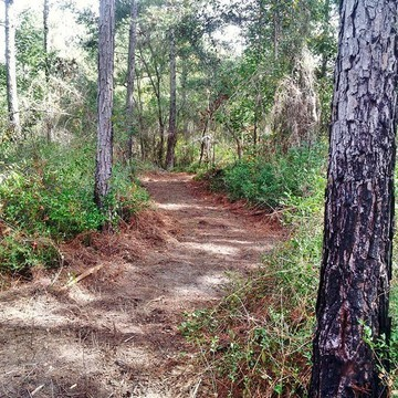 187693-mountain-bike-trail-at-graham-creek-nature-preserve-feature